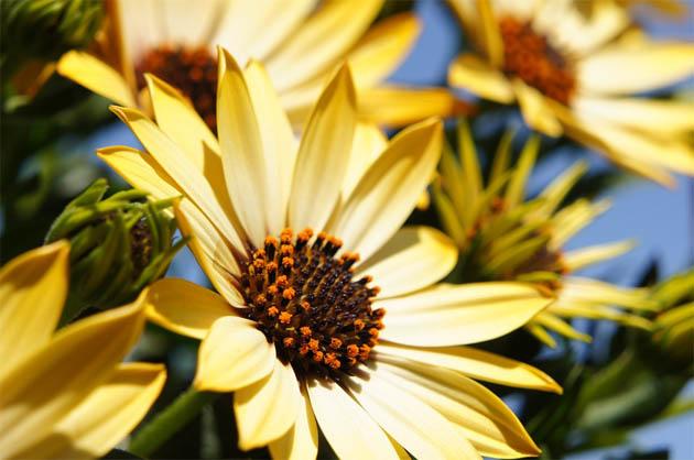 Красивые и удивительные картинки, фото весны - смотреть бесплатно 9