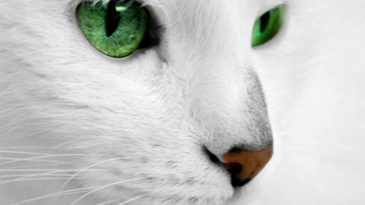 Красивые картинки и фото - белый кот с зелеными глазами 1