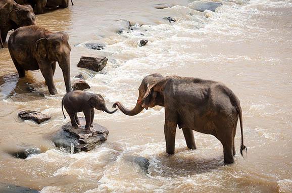 Красивый и удивительный мир природы - картинки, фото, смотреть 10
