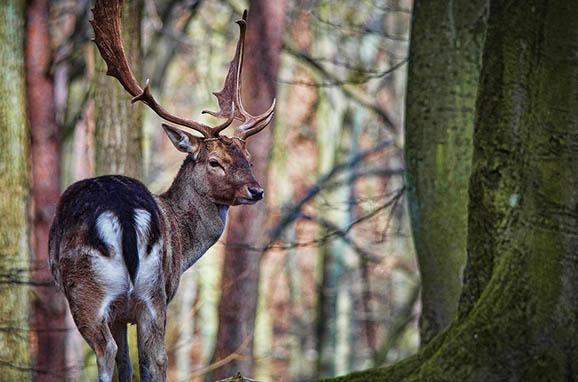 Красивый и удивительный мир природы - картинки, фото, смотреть 12