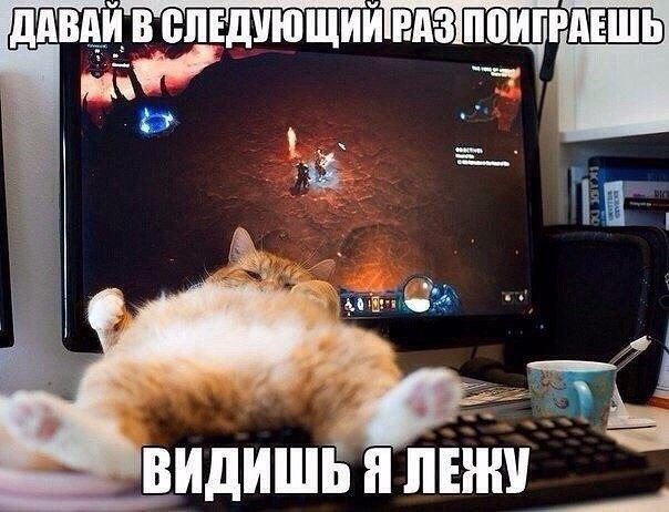 Очень веселые и смешные фото кошек и собак - смотреть бесплатно 1