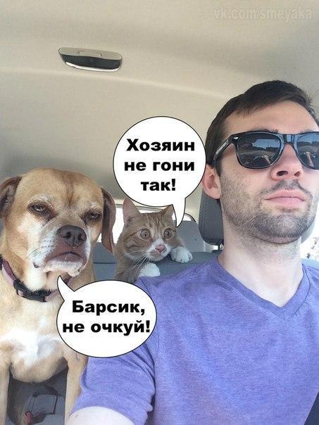 Очень веселые и смешные фото кошек и собак - смотреть бесплатно 10