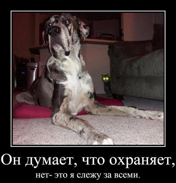 Очень веселые и смешные фото кошек и собак - смотреть бесплатно 3