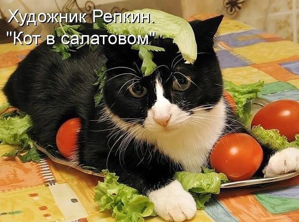 Очень веселые и смешные фото кошек и собак - смотреть бесплатно 4
