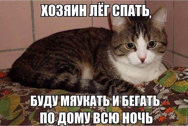Очень веселые и смешные фото кошек и собак - смотреть бесплатно 7