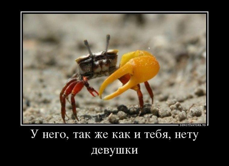 Очень смешные демотиваторы до слез - новые, свежие, 2017 8