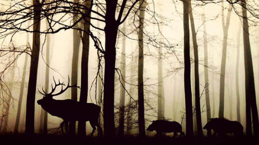 Прекрасная и удивительная природа фото - красивые, смотреть 9