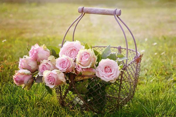 Розы - красивые фото, картинки, смотреть бесплатно 2