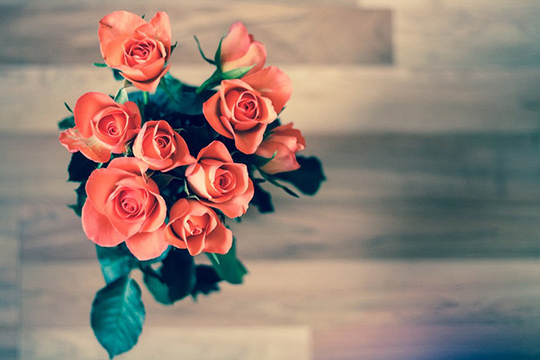 Розы - красивые фото, картинки, смотреть бесплатно 3
