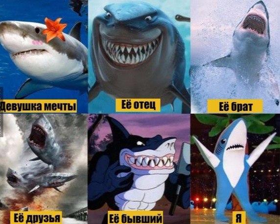 Смешные животные - фото с надписями, новые, свежие, веселые 11