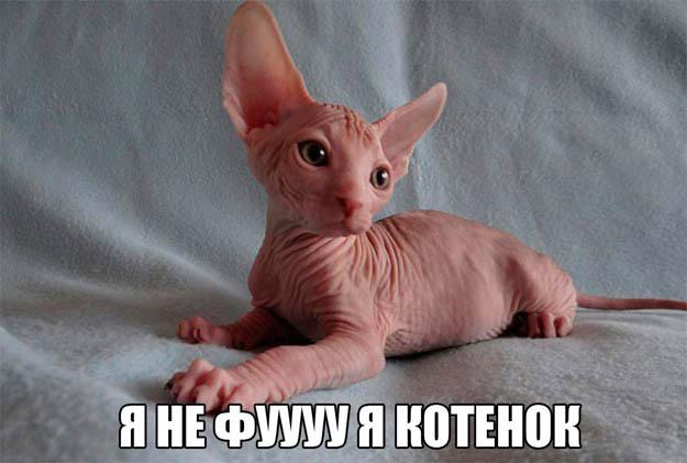 Смешные животные - фото с надписями, новые, свежие, веселые 3