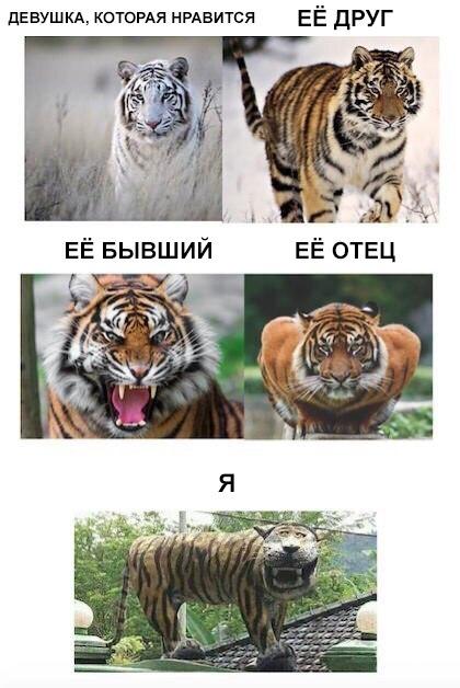 Смешные животные - фото с надписями, новые, свежие, веселые 5