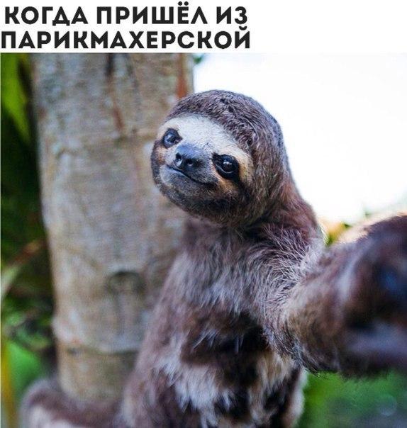 Смешные картинки животных с надписями, до слез - смотреть бесплатно 10