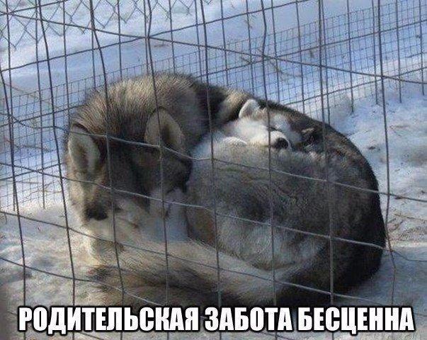Смешные картинки животных с надписями, до слез - смотреть бесплатно 13