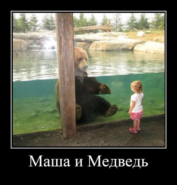 Смешные картинки животных с надписями, до слез - смотреть бесплатно 14