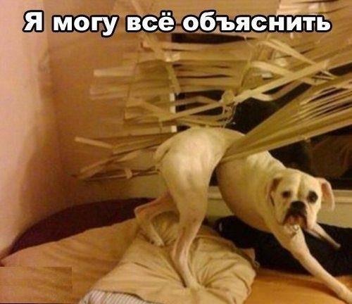Смешные картинки животных с надписями, до слез - смотреть бесплатно 15