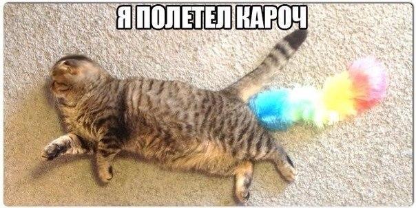 Смешные картинки животных с надписями, до слез - смотреть бесплатно 4