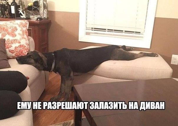 Смешные картинки животных с надписями, до слез - смотреть бесплатно 6