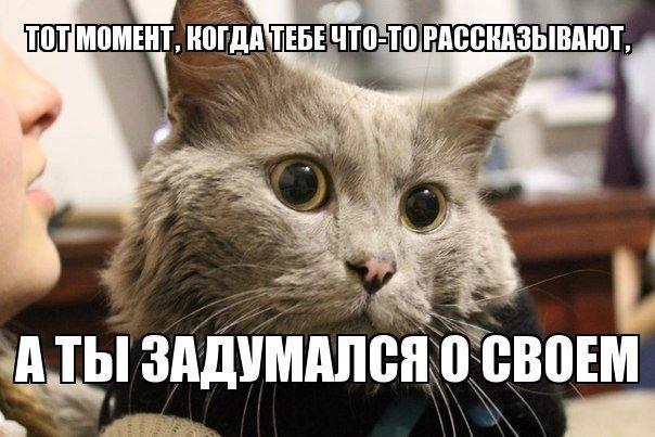 Смешные картинки животных с надписями, до слез - смотреть бесплатно 7