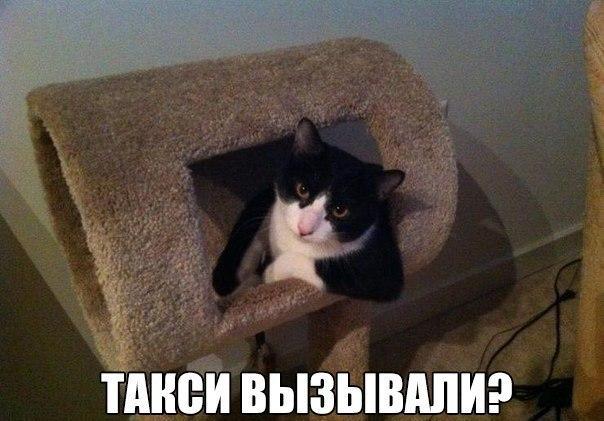 Смешные картинки животных с надписями, до слез - смотреть бесплатно 8