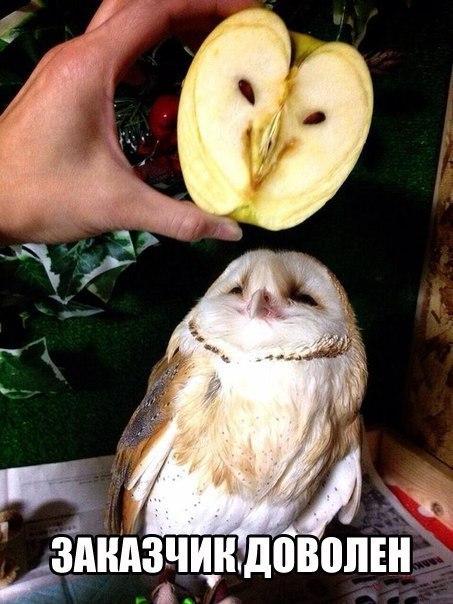 Смешные картинки про животных до слез - смотреть бесплатно 1