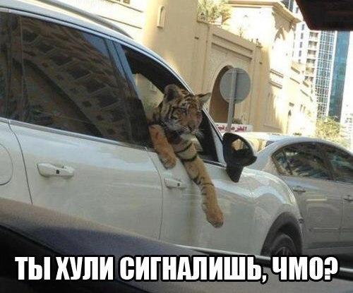 Смешные картинки про животных до слез - смотреть бесплатно 11
