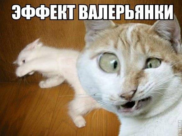 Смешные картинки про животных до слез - смотреть бесплатно 17