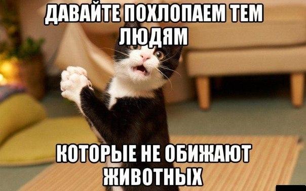 Смешные картинки про котов до слез - смотреть бесплатно 1