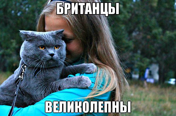 Смешные картинки про котов до слез - смотреть бесплатно 10