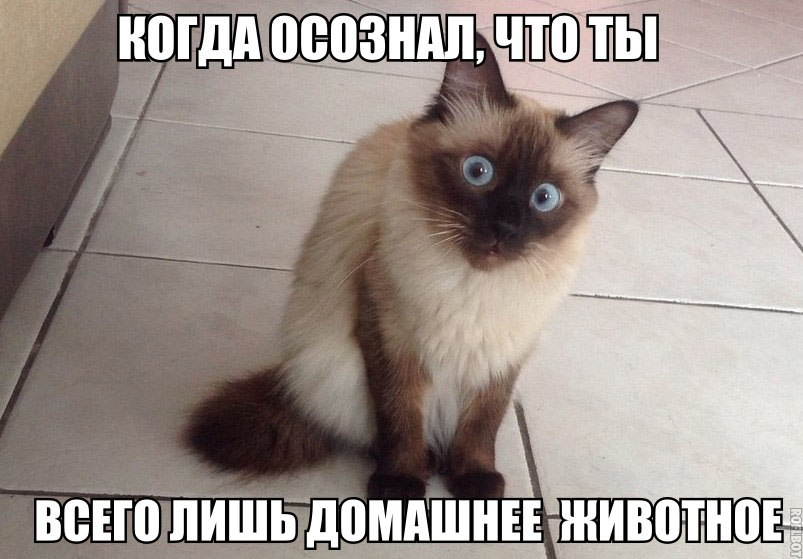 Смешные картинки про котов до слез - смотреть бесплатно 11