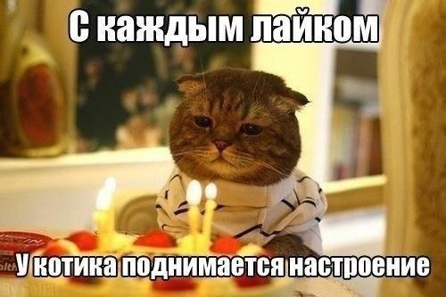 Смешные картинки про котов до слез - смотреть бесплатно 15