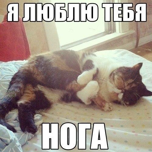 Смешные картинки про котов до слез - смотреть бесплатно 2
