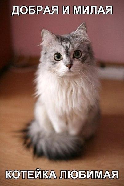 Смешные картинки про котов до слез - смотреть бесплатно 3