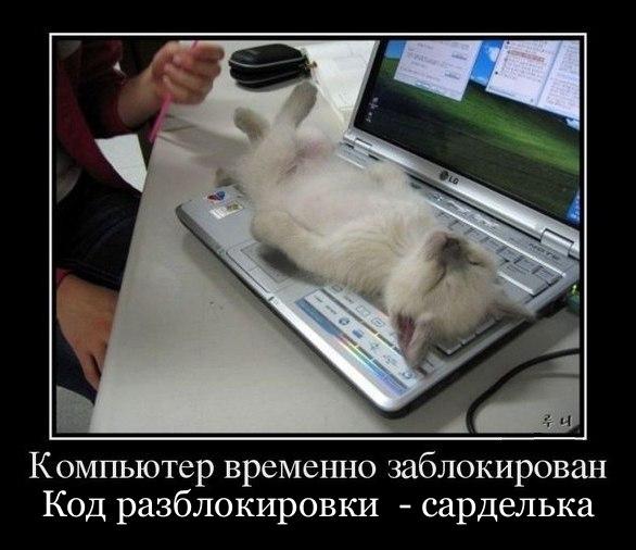 Смешные картинки про котов до слез - смотреть бесплатно 6