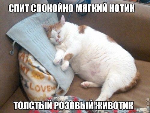 Смешные картинки про котов до слез - смотреть бесплатно 9
