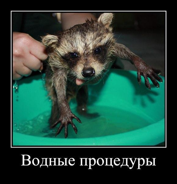 Смешные картинки с надписями про животных - смотреть бесплатно 13