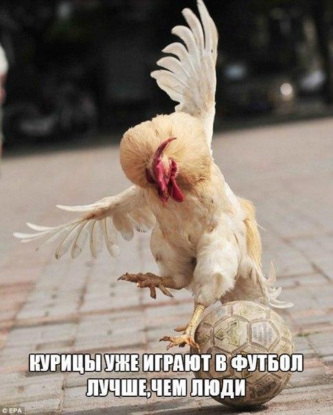 Смешные картинки с надписями про животных - смотреть бесплатно 14