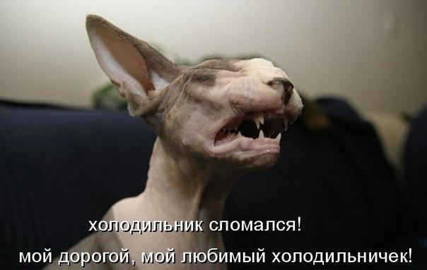 Смешные картинки с надписями про животных - смотреть бесплатно 16