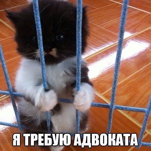 Смешные картинки с надписями про животных - смотреть бесплатно 4