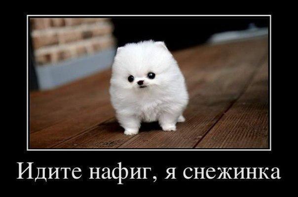 Смешные картинки с надписями про животных - смотреть бесплатно 8