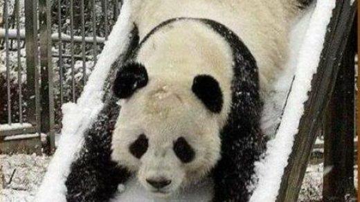 Смешные картинки с надписями про животных - смотреть бесплатно 9