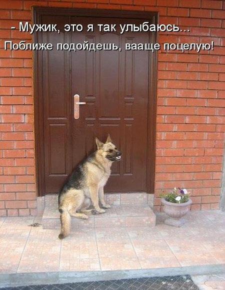 Смешные кошки и собаки - фото с надписями до слез 1