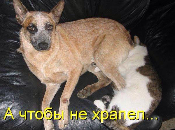 Смешные кошки и собаки - фото с надписями до слез 11