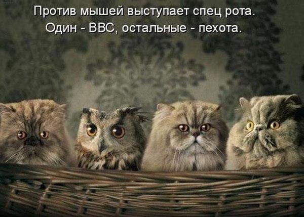Смешные кошки и собаки - фото с надписями до слез 12