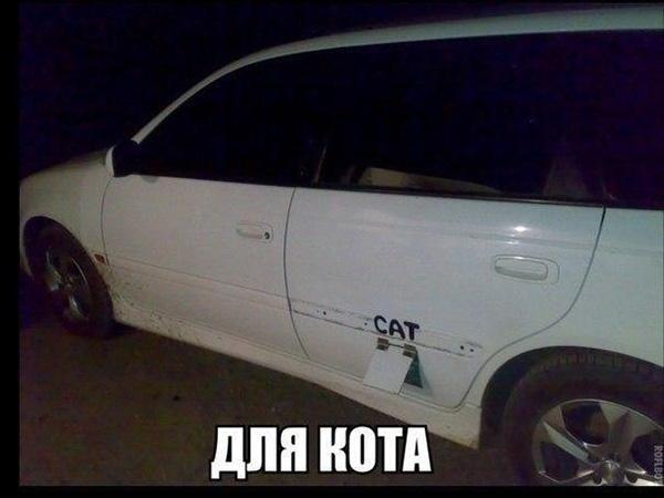Смешные кошки и собаки - фото с надписями до слез 13