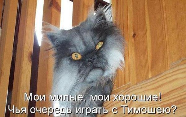 Смешные кошки и собаки - фото с надписями до слез 14