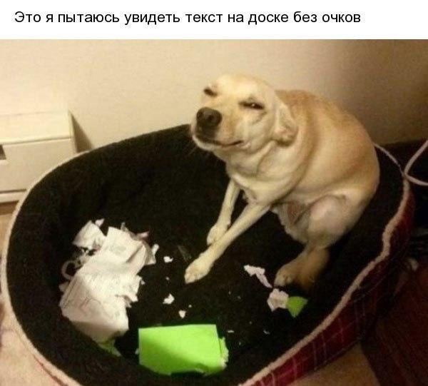 Смешные кошки и собаки - фото с надписями до слез 18