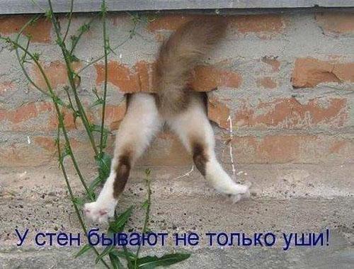 Смешные кошки и собаки - фото с надписями до слез 19
