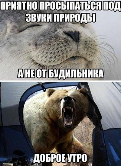 Смешные кошки и собаки - фото с надписями до слез 20