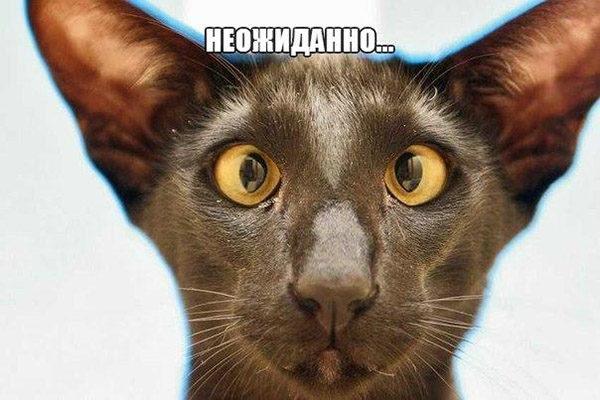 Смешные кошки и собаки - фото с надписями до слез 3
